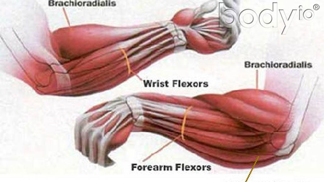 fat-forearm-training